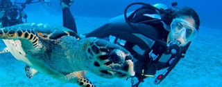 Diving and Water-Sports Services